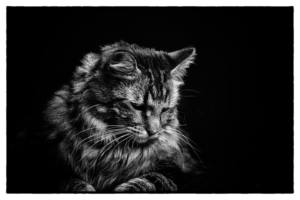 20131206_CatPortraits_0868-Edit.jpg