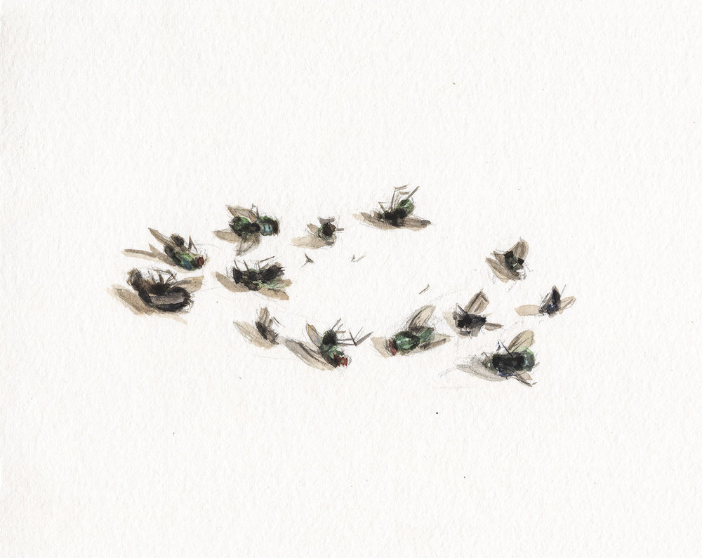 Signs of Life, Musca Domestica