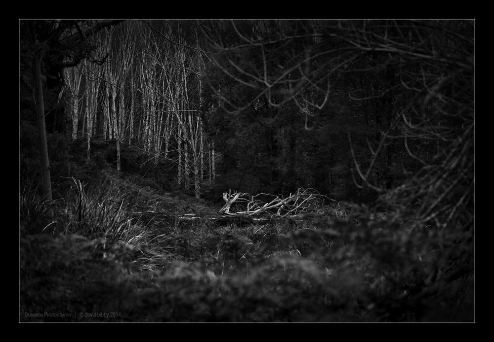 Darkness1.jpg