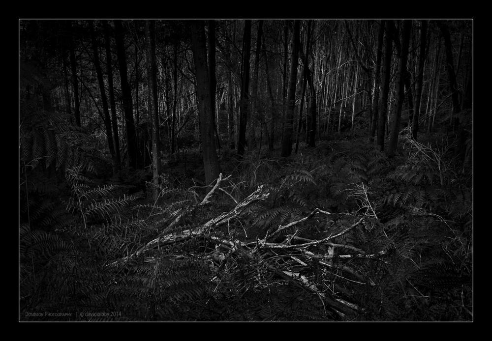 Darkness3.jpg