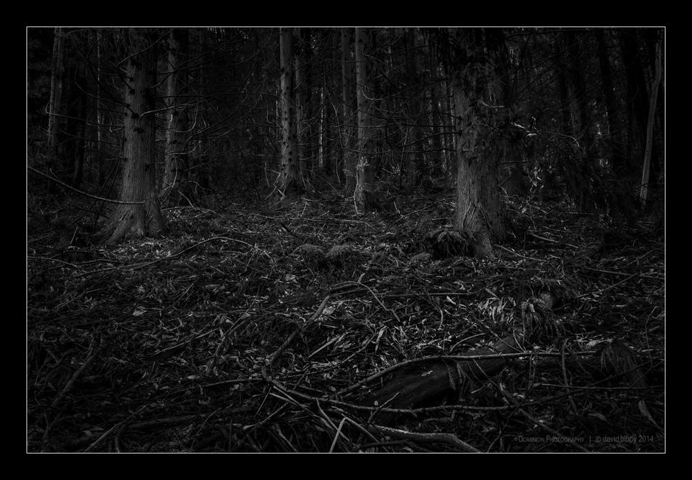 Darkness4.jpg