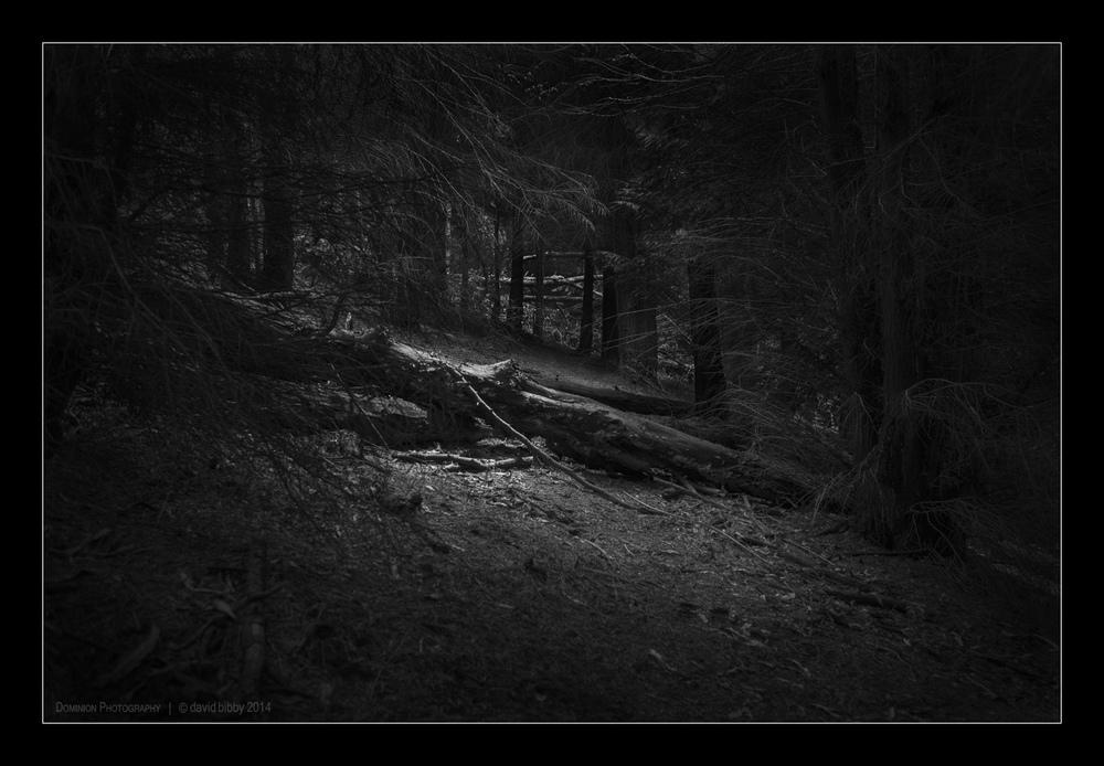 Darkness8.jpg