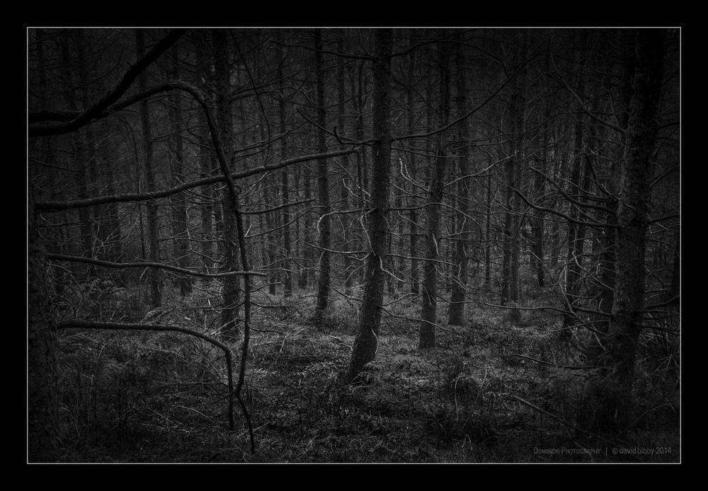 Darkness9.jpg