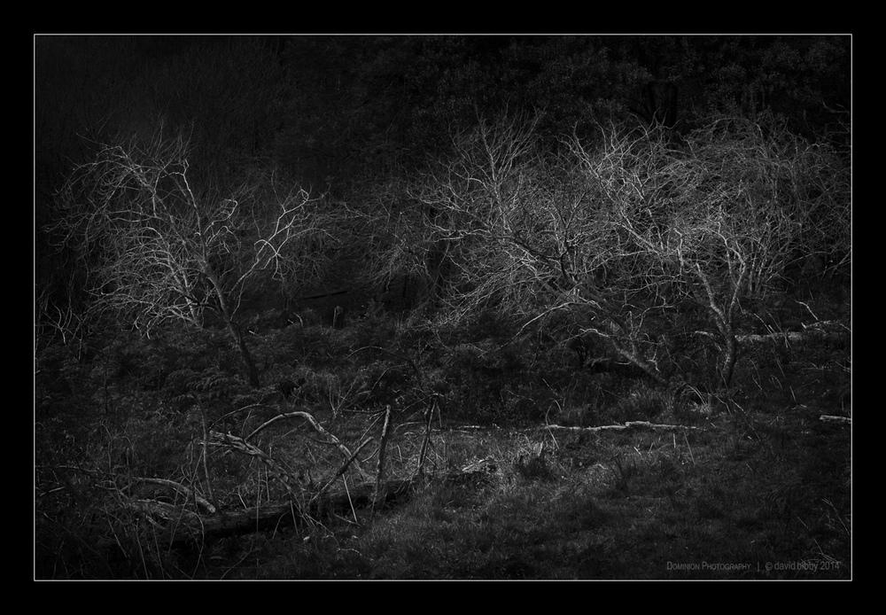 Darkness10.jpg