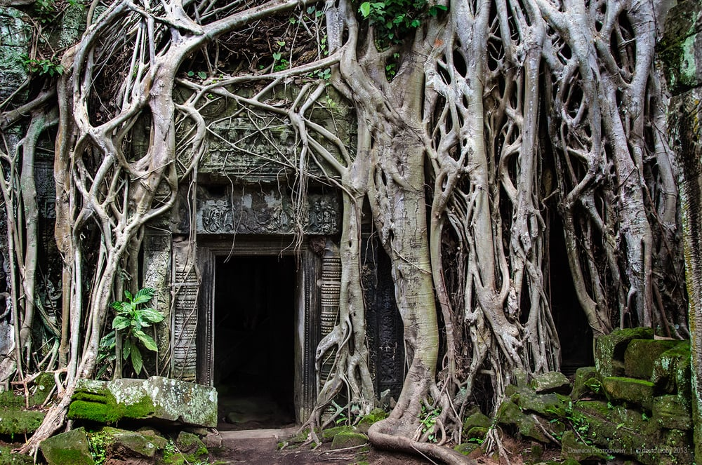 Ta Prohm  - The doorway made famous by the Tomb Raider movie. It was amusing to stand back and listen to guides giving their spiel to their tour groups, and wait for the one inevitable word that I would understand regardless of language... 'Angelina'. Siem Reap Province, Cambodia.