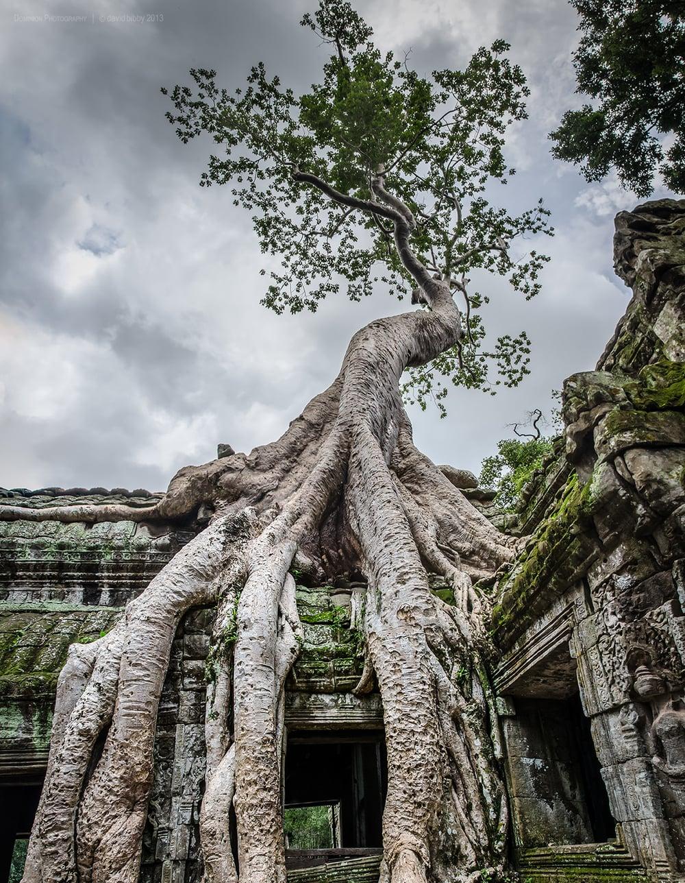 Ta Prohm  - Siem Reap Province, Cambodia.