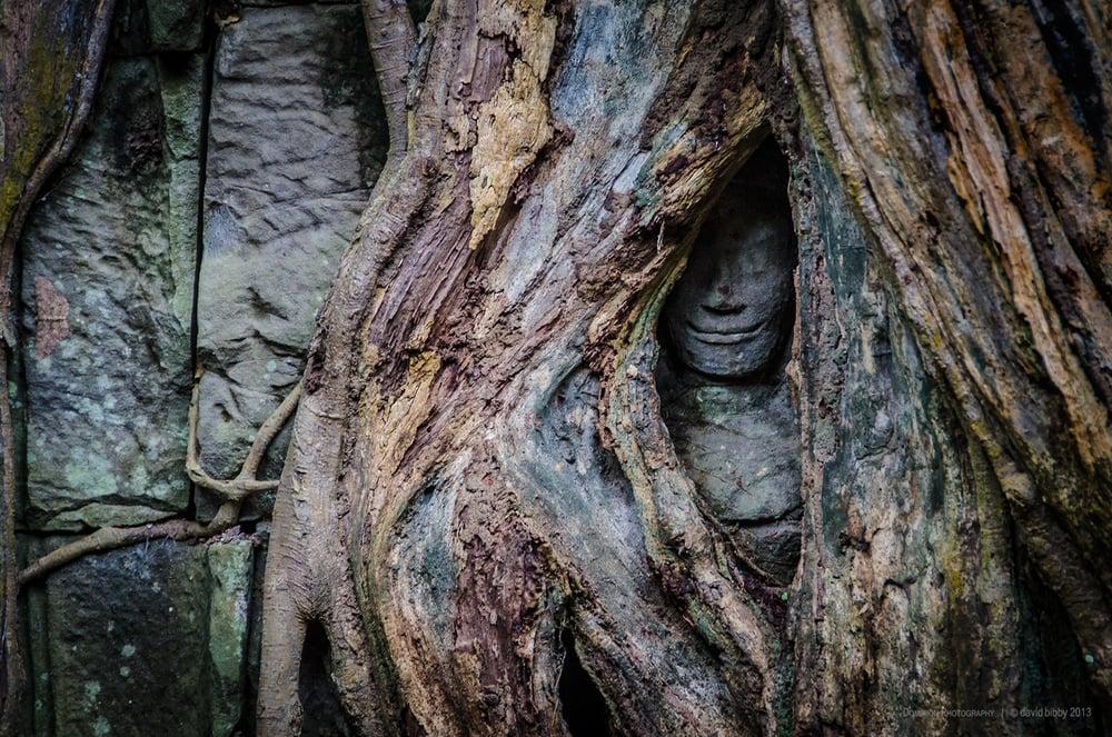 Ancient wisdom  - Ta Prohm. Siem Reap Province, Cambodia.