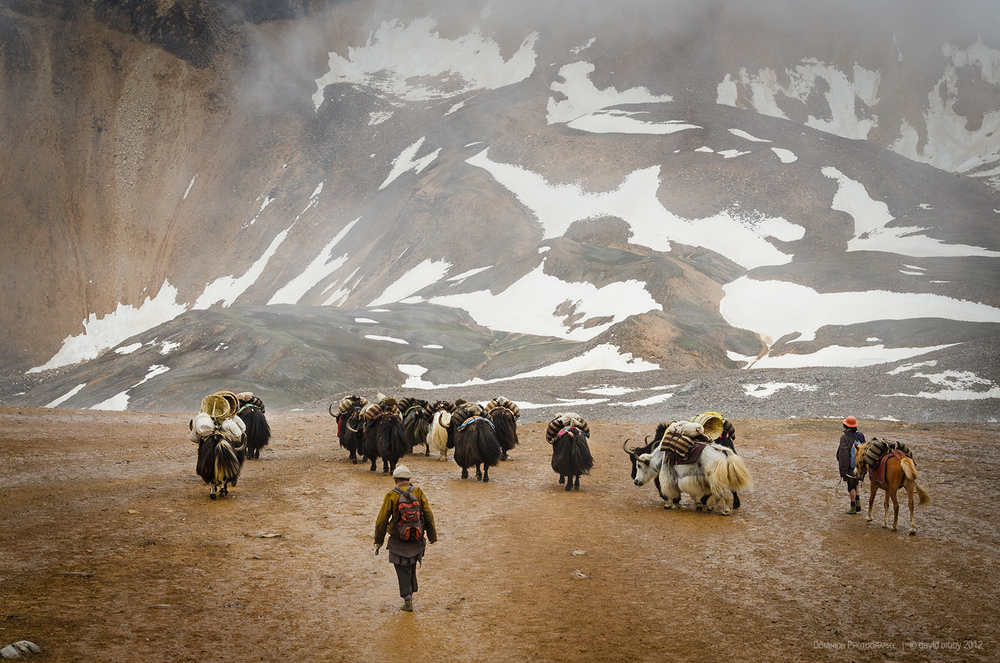 Yak herders descend after crossing the Kagmara La (5115m). Dolpa district.