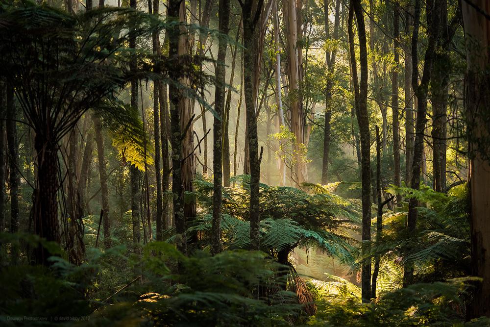 Mt Dandenong, Victoria.