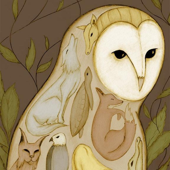 Barn Owl/Oatland Island