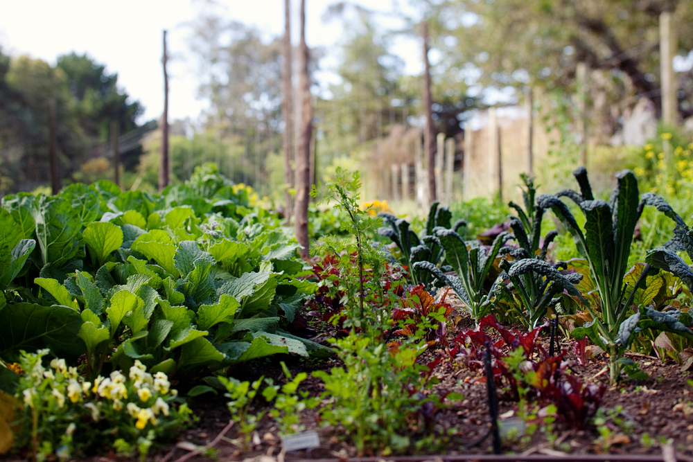 farm-to-table gardens
