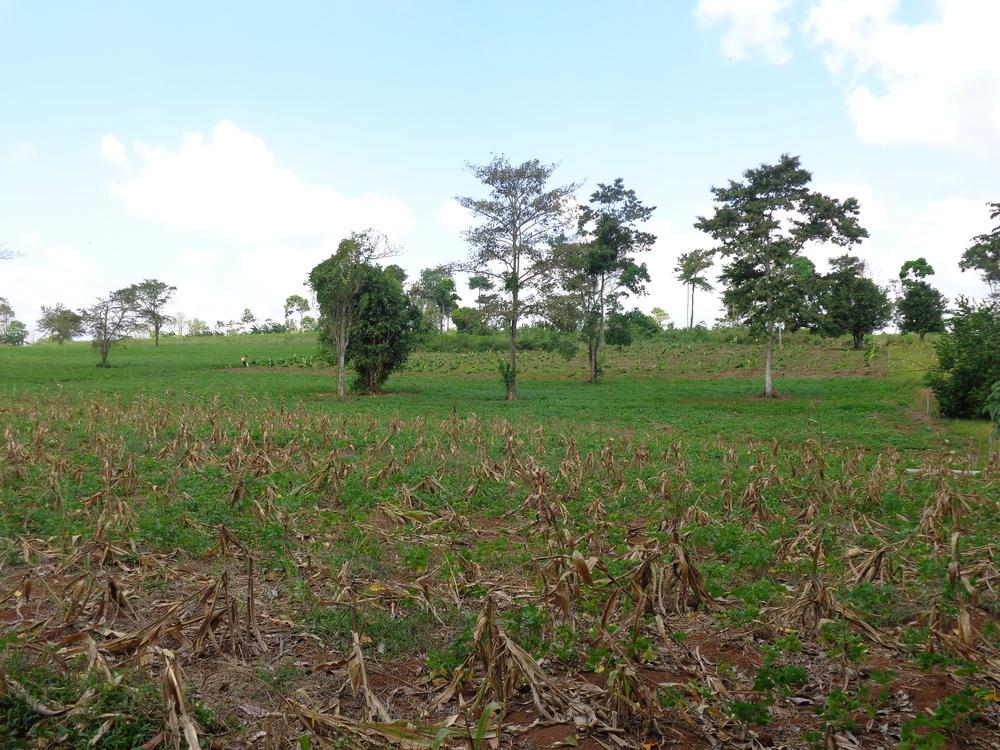 Cesar's Farm