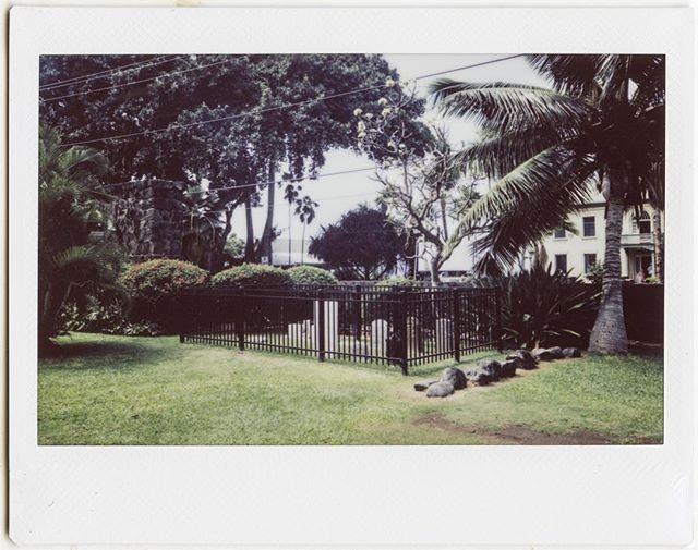 Kona #instant #instax #instaxwide #fujifilm #fujiinstax #instax210 #hawaii #kona #cemetery