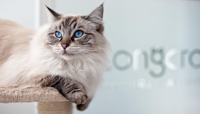 Photoshoot Longcroft Luxury Cat Hotel Richard Pardon Car And