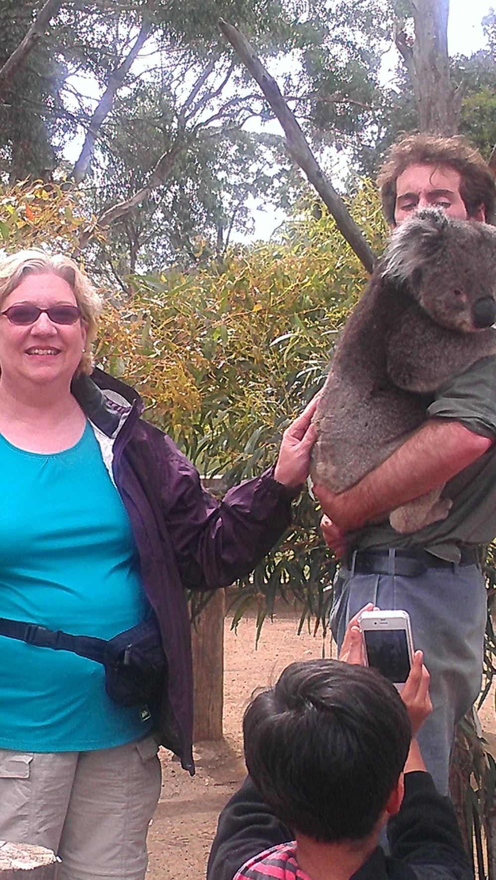 Koala Tasmania
