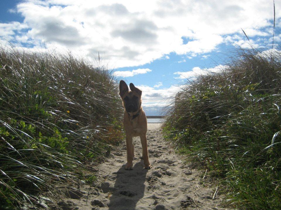Charlie Beach Path.jpg