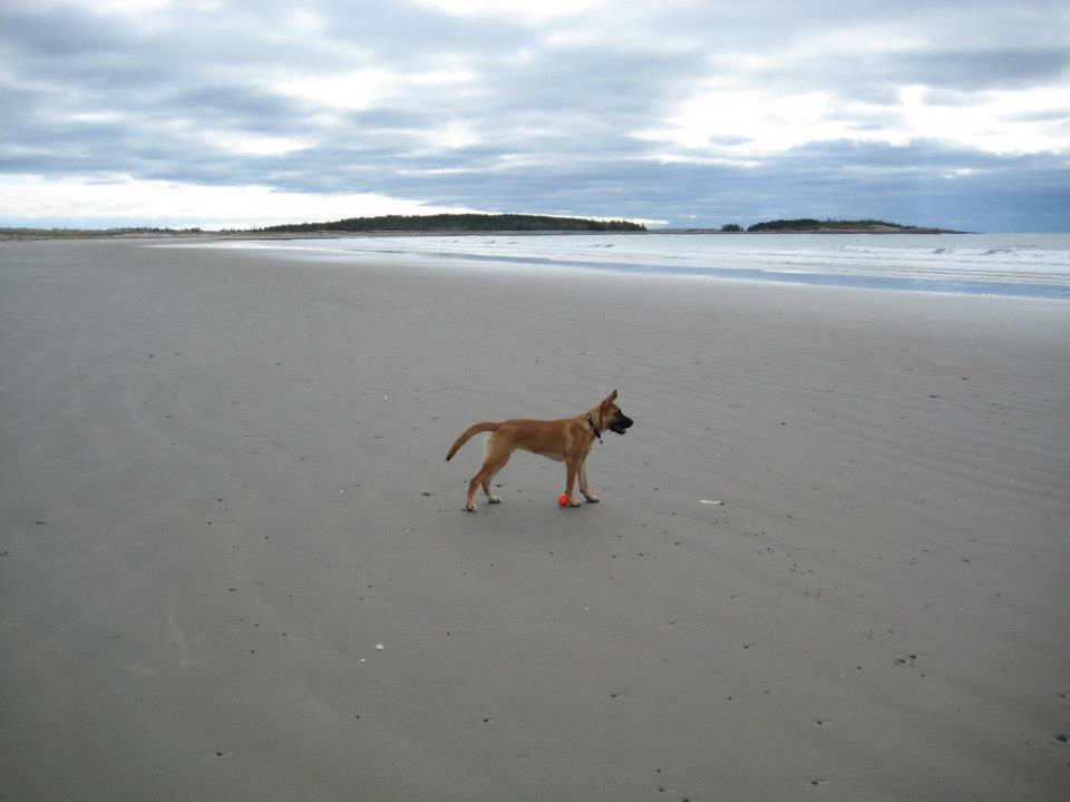 Charlie Beach - off leash pointed.jpg