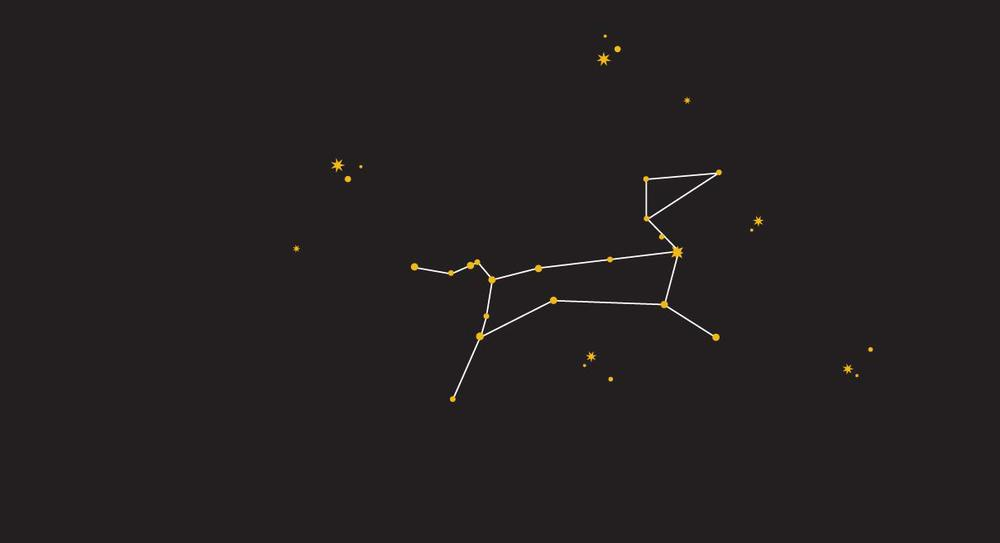 Sirius Dog Walking - Canis Major