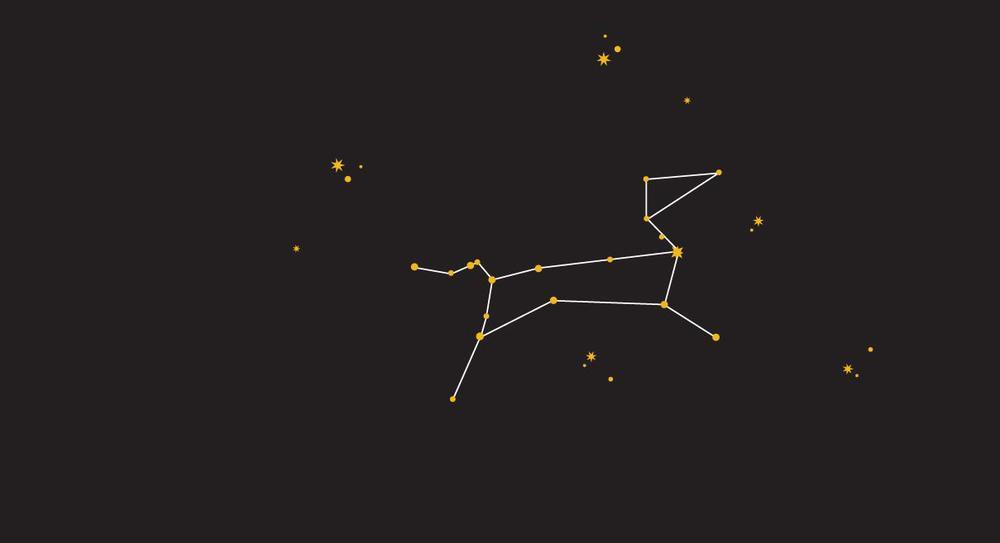 Sirius Dog Walking - Canis Major