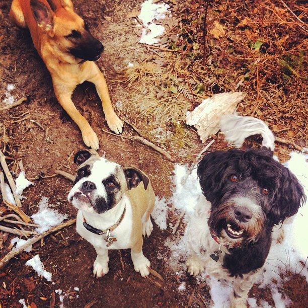 Sirius Dog Walking - Original Three