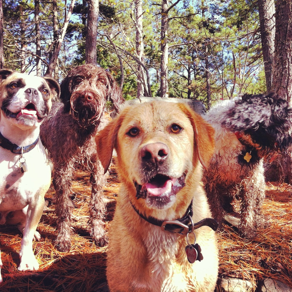 Sirius Dog Walking - Loving life