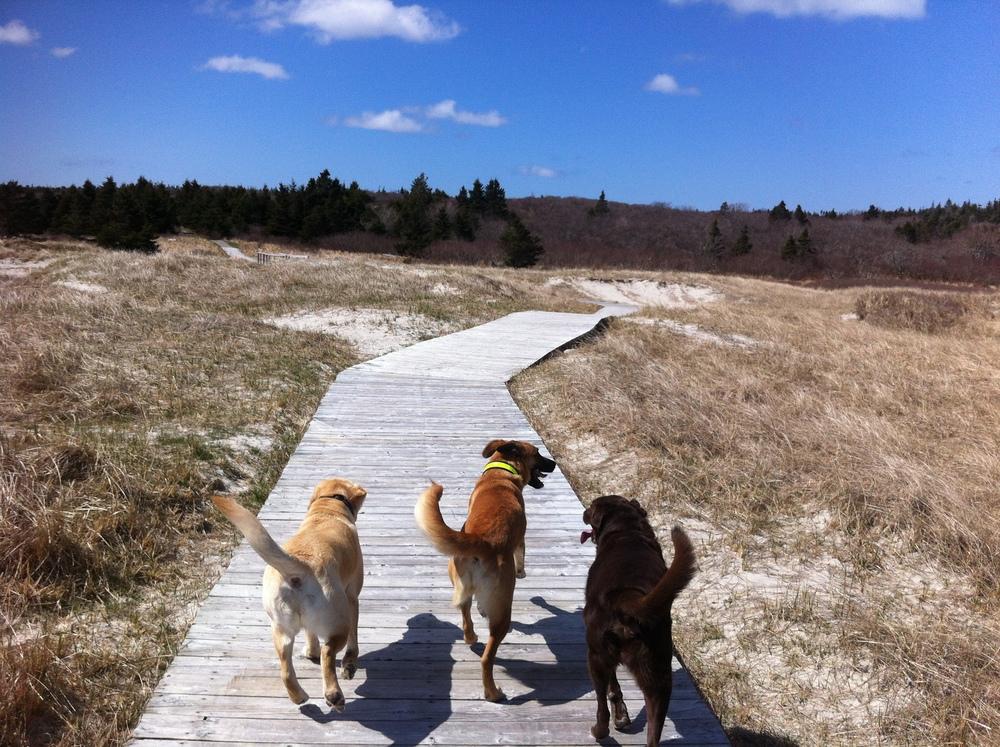 Sirius Dog Walking - Crystal Crescent