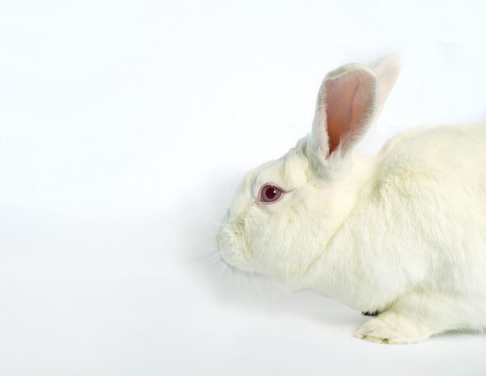 HF_Bunny_01.jpg