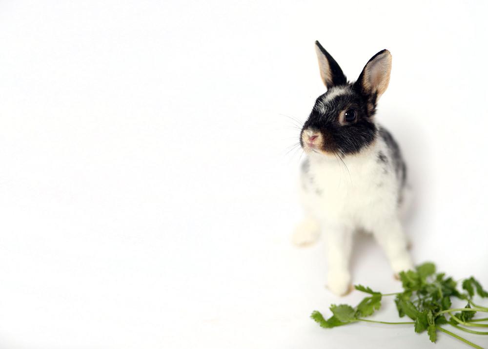 BunnyRescue_026.jpg