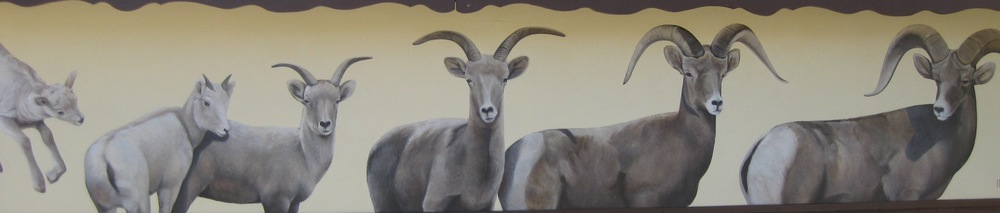 Jane Kim's mural on the Kearsarge Cabin depicts the life stages of a Sierra Nevada Bighorn ram.