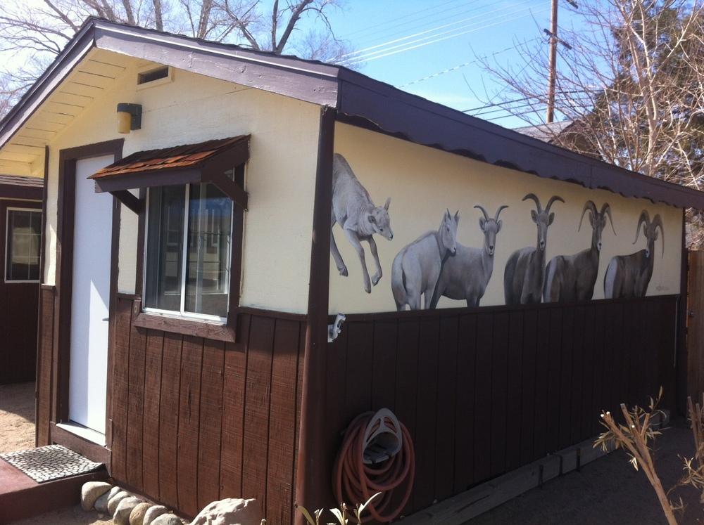 Cabin 1: Shepherd