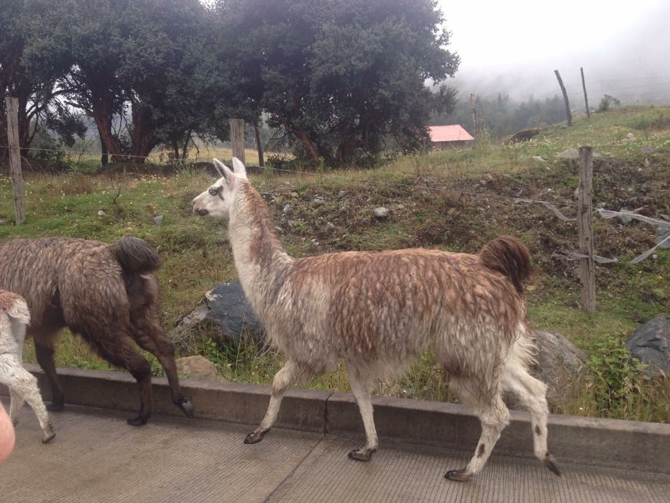 Nos nouveaux amis de Cuenca!