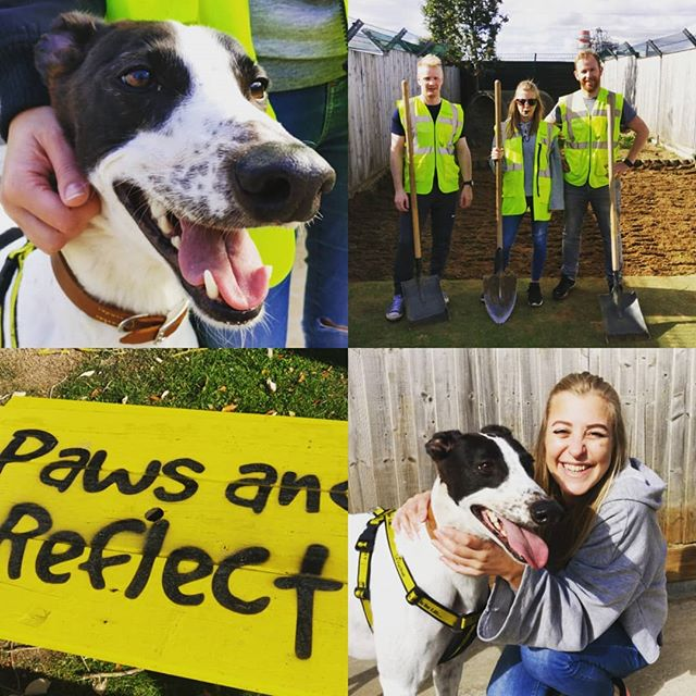 Great day with the @atomicdublin dreamteam volunteering at @dogstrust_ire adoption centre. A lot of perfect pooches out there looking for their forever homes. 💔 Please don't buy doggos folks, adopt! 🐾😊 . . . . . #dogs #rescuedog #adoptdontshop #dogsofinstagram #charity