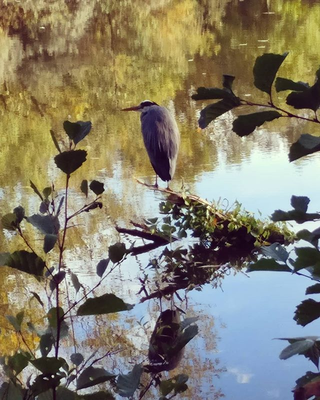 Gil Scott Heron 🦅 . . . . . #naturephotography #nature #landscape #bird #beauty