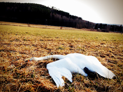 En vit död...