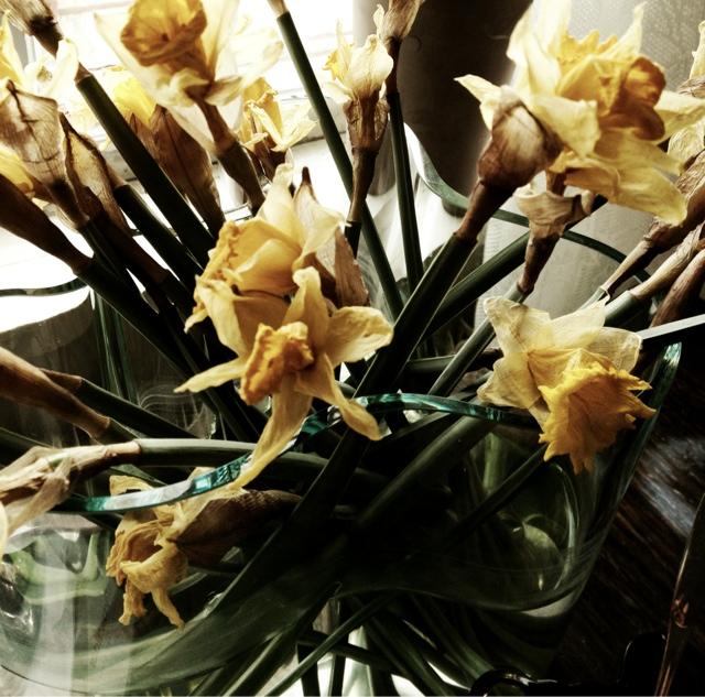 Mina vackra vissnade blomster...