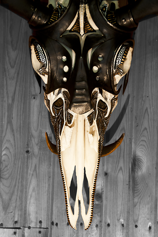 petra-shara-stoor-skull-art-galwan-2.png