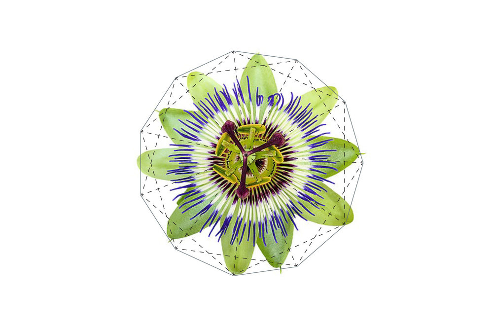 sony-fibonacci-cyto-3.jpg