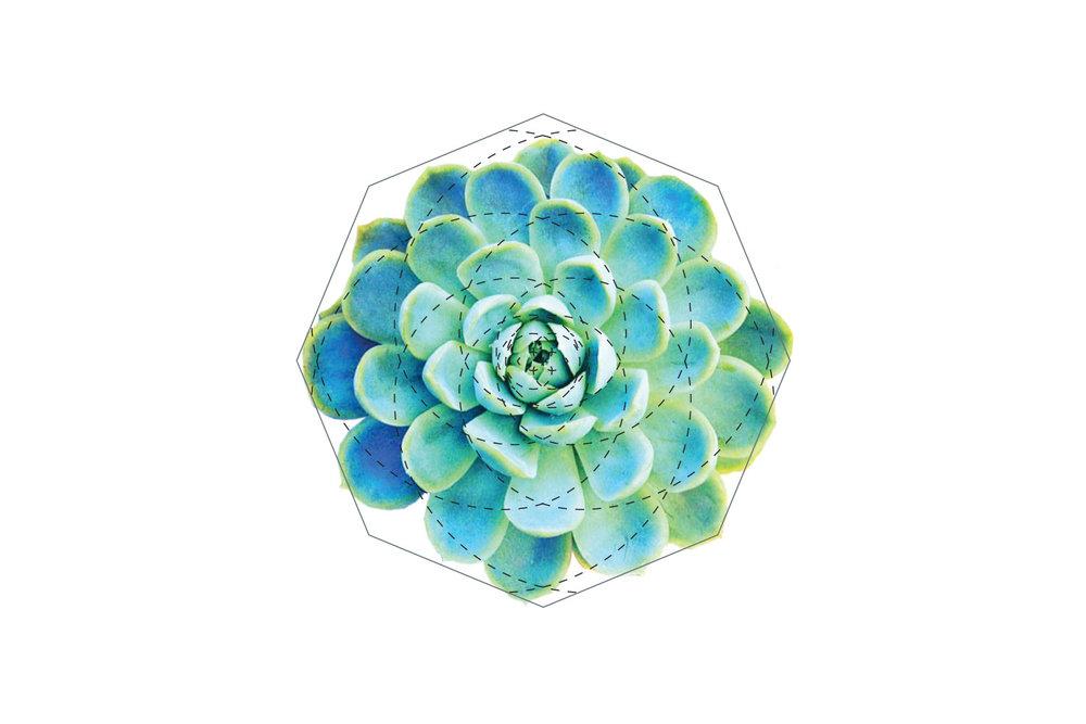 sony-fibonacci-cyto-1.jpg