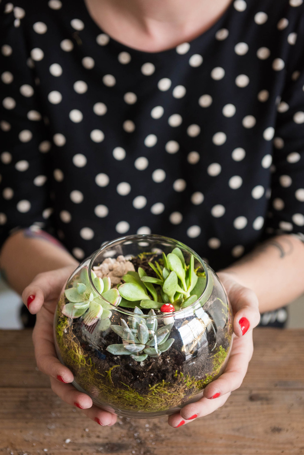 Terrariums from Sill Life