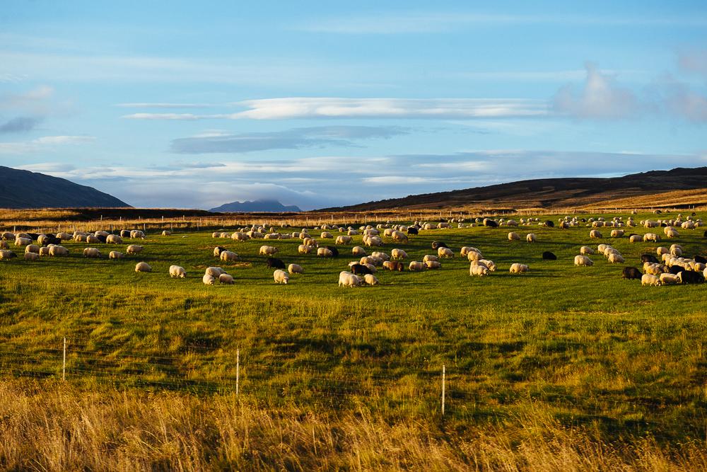 GoKateShoot-Iceland-822.jpg