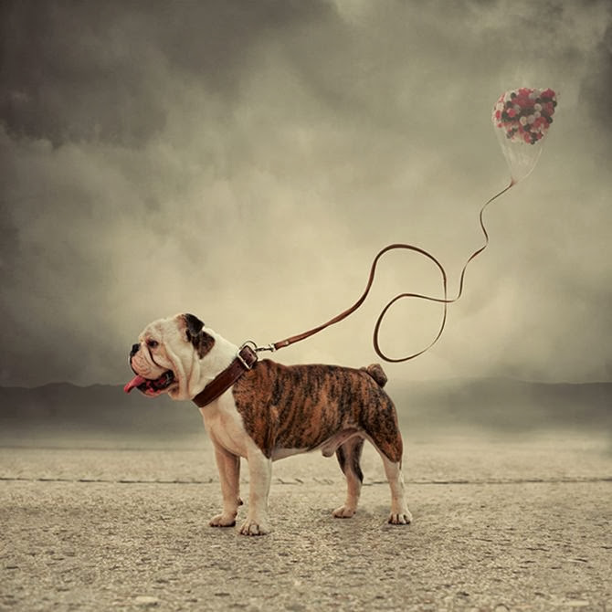 Caras Ionut Photography - 002.jpg