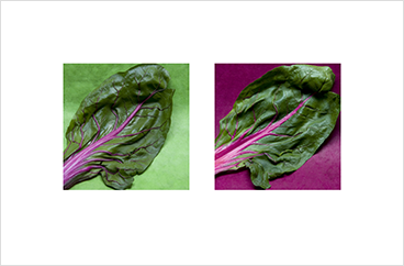 Local Color 1 (Chard)
