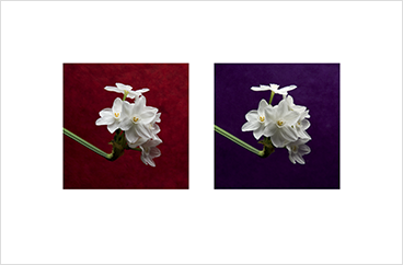 Local Color 5 (Paperwhites)