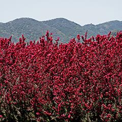 Mountain Pose 3 (California)