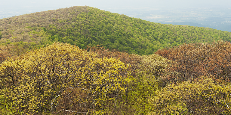 Long View 2 (Shenandoah Spring)