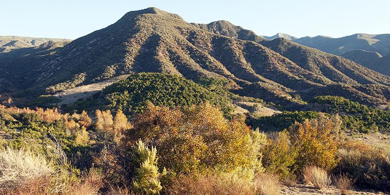 Long View 6 (California Fall)