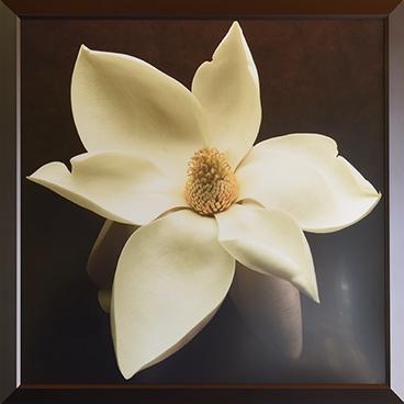 Magnolia frame (big)_6077.png