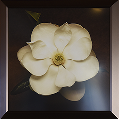 Magnolia frame (small)_6055.png