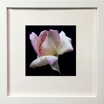 Soft white frame
