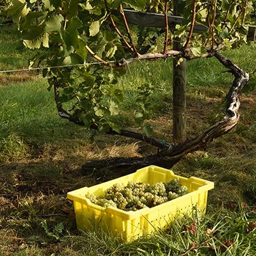 Harvest happens_©acfallen.png